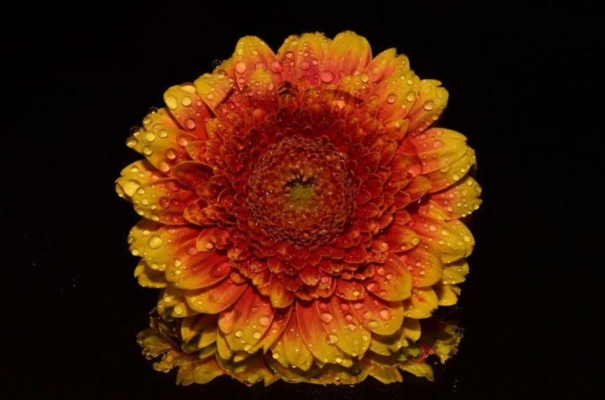 Abnehmen durch Blume